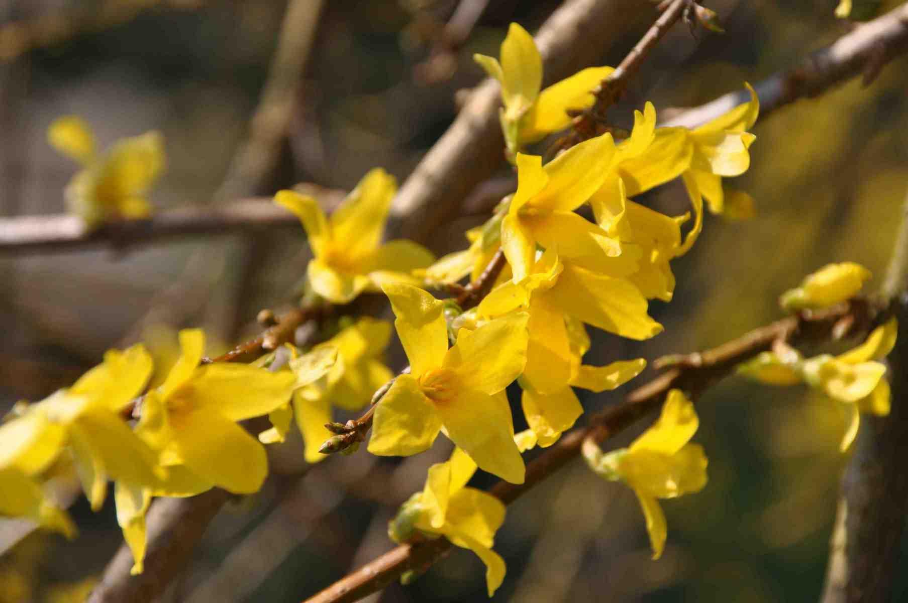 Fleur-jaune-2