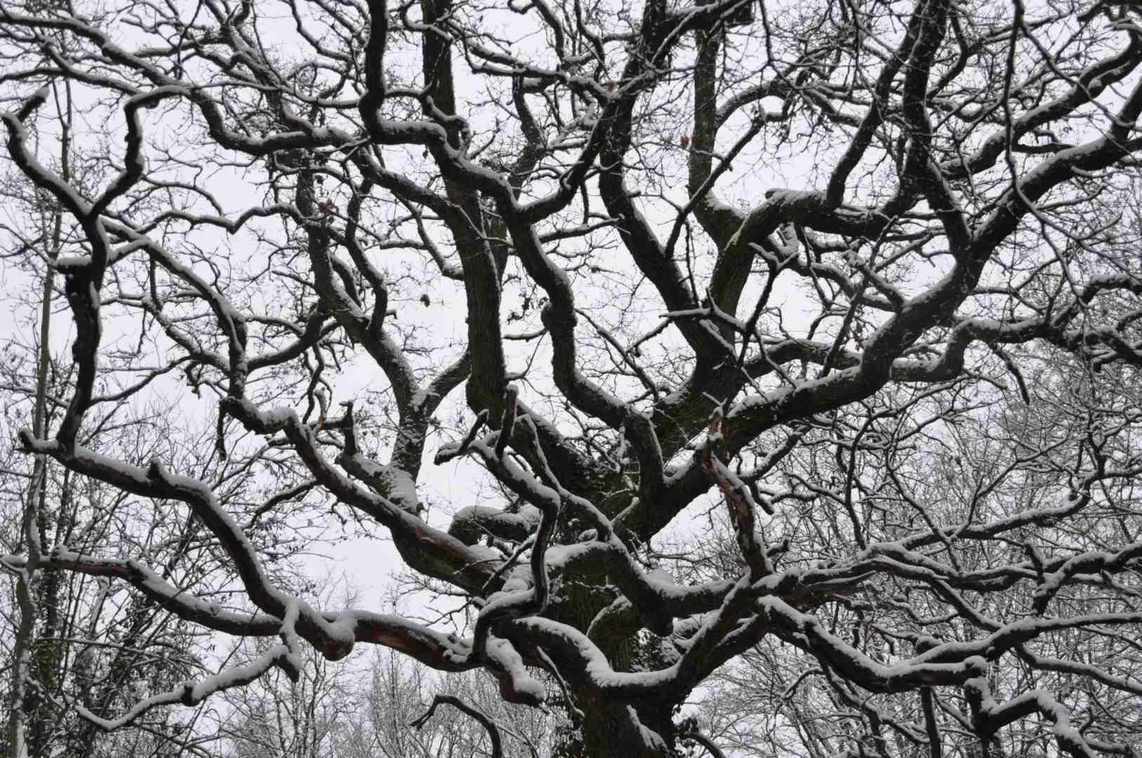 Icy-Tree