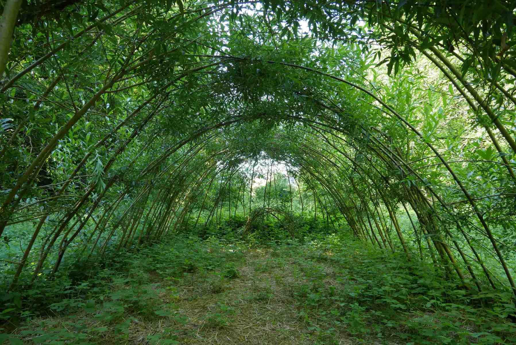Tunnel-vert
