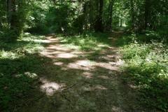 Dans le petit bois du parc.
