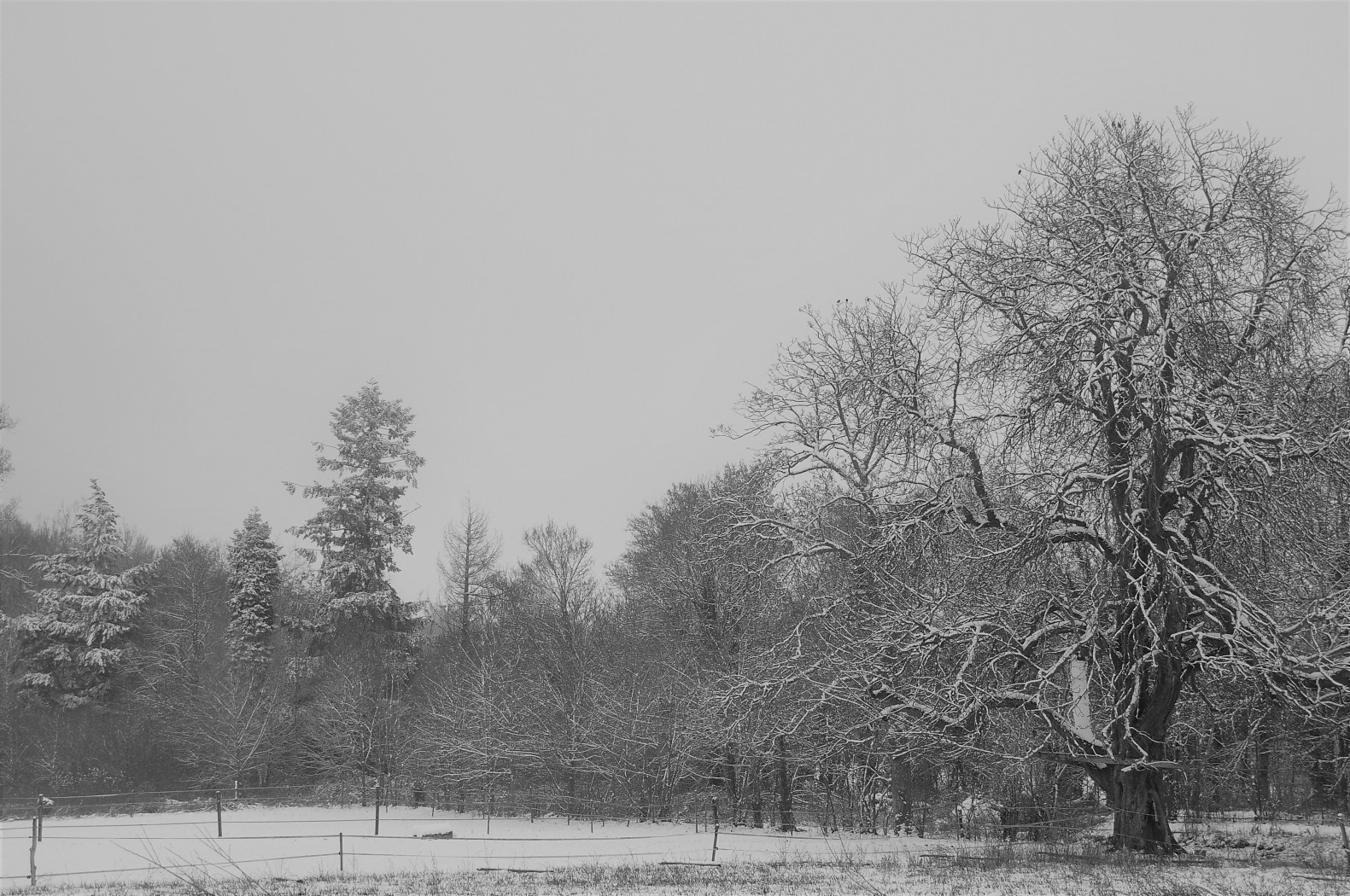 2019-01-22_campus_sous_la_neige_8