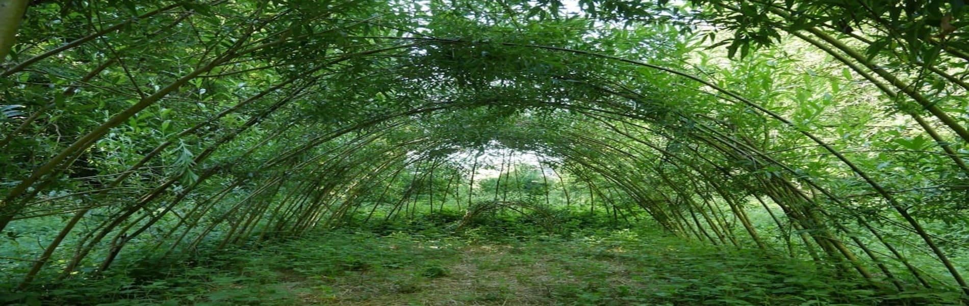Notre projet de forêt-jardin pédagogique